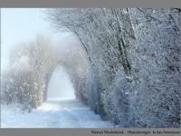 Werner Wieddekind: Wintermorgen