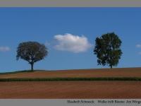 Elisabeth Schmock: Wolke trifft Bäume