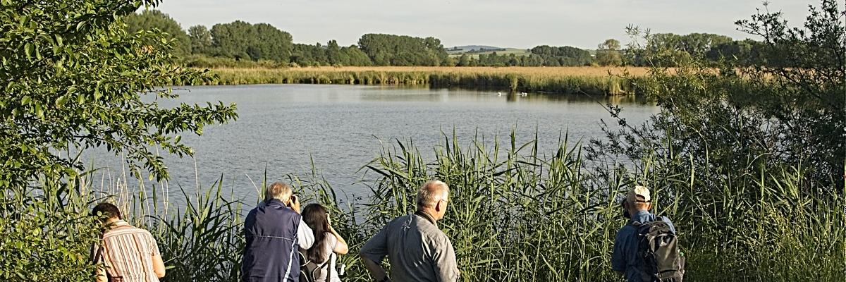 Permalink auf:Reinheimer Teich